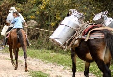 precio de la leche, aumento precio de la leche, precio de la leche en colombia, incremento en el precio de la leche, ganadería colombia, ministerio de agricultura, consejo nacional lácteo, 7 % aumento precio de la leche, ganadería colombia