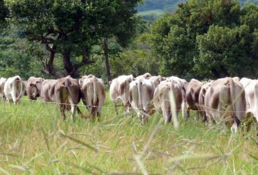 pastoreo racional, pastoreo racional voisin, ventajas del pastoreo racional voisin, prv colombia, pastoreo racional colombia, CONtexto ganadero, ganadería colombia