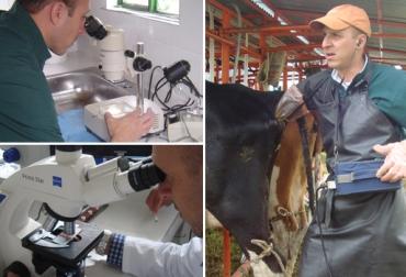 Protocolos transferencia de embriones, métodos transferencia de embriones, transferencia de embriones en bovinos, procesos de biotecnología reproductiva, costo transferencia embriones Colombia, transferencia embriones Colombia, CONtexto ganadero, ganaderos Colombia