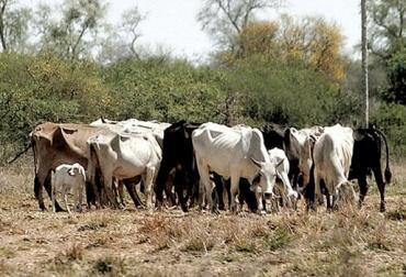 efectos del verano en la ganadería, ganadero prepárese para el verano, recomendaciones para afrontar el verano, conservar alimento para el ganado, conservar agua para el verano, plan sanitario para el ganado, CONtexto ganadero