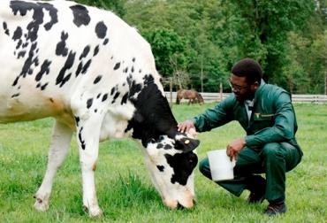Bienestar Animal, bienestar animal  en la ganadería, Bienestar animal bovinos, manejo animal, CONtexto ganadero