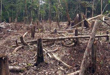 deforestación, deforestación colombia, zonas deforestadas en Colombia, ganadería colombia, Ministerio de Ambiente, protección del medio ambiente