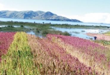 FAO, agricultura biodiversidad y servicios ecosistémicos, CONtexto ganadero