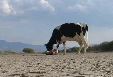 Ricardo Botero Maya, Carta Fedegán, La sequía tiene solución, Pastoreo Racional Voisin (PRV). , CONtexto ganadero, ganadería colombia