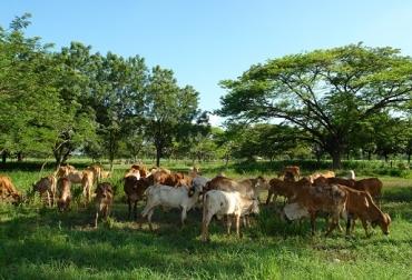 Erosión eólica, precipitaciones, clima, humedad, la velocidad del viento, plantas amortiguan la lluvia, cercas vivas, árboles, SSPi, CONtexto Ganadero, noticias de ganadería colombiana.