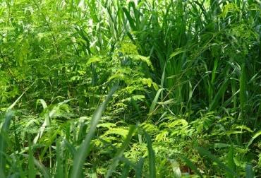 Establecer un SSPi, 8 mandamientos, análisis, preparación de suelos, elegir especies, establecer cinco niveles de material verde, privilegiar la luz, periodos de descanso, no insecticidas, no agredir fauna, no sobrepastorear, sal y agua, CONtexto Ganadero, noticias de ganadería colombiana.