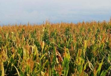 Siembra directa, expandirse, superficie sembrada, Argentina, producción de cereales y oleaginosas, degradación de suelos, CONtexto Ganadero, noticias de ganadería colombiana.