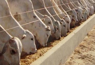 Suplementos, suplementos para bovinos, INIA, Consejos prácticos para suplementar, INIA, CONtexto ganadero, ganadería colombia, noticias ganaderas colombia