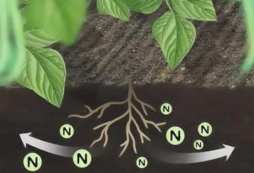 Nutrición no depende del Nitrógeno, micro nutrientes de la planta, macronutrientes de la planta,  competencia, calidad nutricional de la planta, CONtexto Ganadero, noticias de ganadería colombiana.