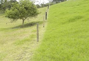 Corregir suelos, trato del pasto como cultivo, plan de manejo, disminución de acidez, 7 estrategias, mayor nutrición, optima producción, productividad individual, CONtexto Ganadero, noticias de ganadería colombiana.