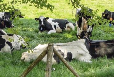 Bienestar animal, eficiencia de conversión, claves bienestar animal, rutinas en las vacas, retorno económico ganadería, mayor producción de leche, adaptación de las vacas, costumbre de las vacas, vacas se adaptan al ordeño, mejorar eficiencia de conversión, pastoreo eficiente, CONtexto ganadero, ganaderos Colombia, noticias ganaderas Colombia