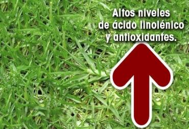 Acido linolénico en Kikuyo, pasto trópico alto, adaptable a otros climas, presión sistólica y el nivel de colesterol plasmático, previene la trombosis, CONtexto Ganadero, noticias de ganadería colombiana.