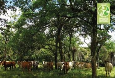 Ganadería Colombiana Sostenible, GCS, Regeneración natural, árboles dispersos en potrero, restablecer y recuperar especies arbóreas, dispersión natural o de las semillas que quedan en el suelo, biodiversidad, adaptación al clima y al suelo, cámbulos o robles, cedros, laureles, campanos, iguaes, piñones, refugio para animales silvestres, ganadería bovina, Ganadería, ganadería colombiana, noticias ganaderas, noticias ganaderas Colombia, CONtexto ganadero
