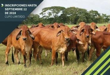 I Seminario de Ganadería Climáticamente Inteligente en Huila, I Seminario de ganadería climáticamente inteligente en zona de Bosque seco tropical, ganadería climáticamente inteligente, ganadería colombia, Asopastoril Colombia, CONtexto ganadero, ganaderos colombia, noticias ganaderas colombia