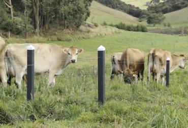 Cerca eléctrica, 5 pasos a tener una cerca eléctrica exitosa, Ganadería, ganadería colombiana, noticias ganaderas, noticias ganaderas Colombia, CONtexto ganadero
