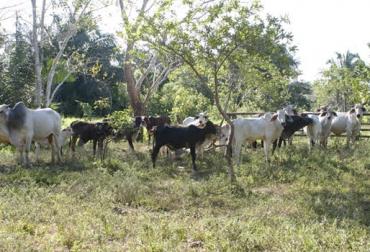 Asistencia técnica a ganaderos del Meta, TNC, CIPAV, Ganadería Colombiana Sostenible, despensa agroalimentaria, aumento de productividad, mejoramiento de rentabilidad, CONtexto Ganadero, noticias de ganadería colombiana.