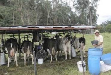 Cuatro factores que irrumpen la eficiencia, lechería especializada, precio pagado al productor alto, costos de producción más altos del mundo, TRM y su tendencia alcista, clima, fenómeno de El Niño, CONtexto ganadero, noticias de ganadería colombiana.