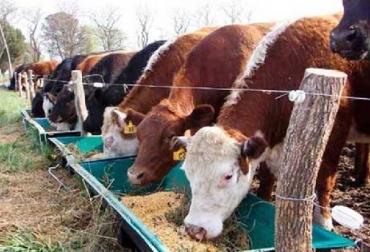 Colombia, fenómeno de El Niño, importaciones de leche en polvo y derivados en 2019, Programa de Suplementación Bovina, Fedegán pide al gobierno más recursos para Programa de Suplementación Bovina, Contexto ganadero, noticias ganaderas, vacas