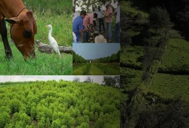 Ganadería Colombiana Sostenible, Proyecto Ganadería Colombiana Sostenible, GCS, Así va la alianza para hacer de la ganadería un negocio rentable y sostenible, avances del Proyecto Ganadería Colombiana Sostenible, FEDEGÁN, Fundación CIPAV, The Nature Con-servancy (TNC), Fondo para la Acción Ambiental y la Niñez (Fondo Acción), Global Envi-ronmental Facility (GEF), Departamento para Negocios, Energía y Estrategia Industrial (BEIS) del Gobierno Británico, sistemas de producción silvopastoriles,