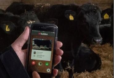 App ganadería, Reino Unido, Tudder, Así funciona Tudder el Tinder de las vacas, Contexto ganadero, noticias ganaderas, vacas