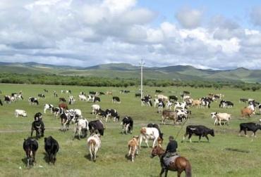 Aclimatar ganado, aclimatar vacas, adaptación de vacas, movilizar bovinos, movilizar ganado, ganadería sobre el nivel del mar, metros sobre el nivel del mar, cuidados a la hora de cambiar el ganado de predio, transporte de bovinos, llegada de bovinos, arribo de bovinos, llegada de los bovinos, desembarque vacas, manejo ganado, desembarque ganado, manejo de bovinos, Tipo de raza de acuerdo al piso térmico en Colombia, piso cálido, piso templado, piso frío, páramo, CONtexto ganadero, ganaderos Colombia