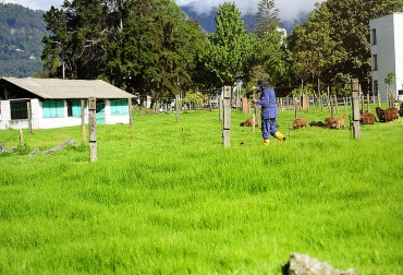 Ganadería, ganadería colombia, noticias ganaderas, noticias ganaderas colombia, CONtexto ganadero, kikuyo, pasto kikuyo, pasturas, pasturas para el ganado, calidad del pasturo,