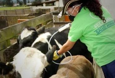 Colombia, aftosa, brucelosis, rabia silvestre, vacunación, vacunación contra la aftosa, Fedegán, ICA, I ciclo de vacunación 2019, CONtexto ganadero, noticias ganaderas colombia, ganadería sostenible