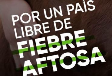 recuperación estatus sanitario Colombia, Ciclo de Vacunación, colombia país libre de aftosa, acreditación país libre de fiebre aftosa Colombia, Minagricultura, ICA, fedegan, FNG, gremio ganaderos, ganaderos