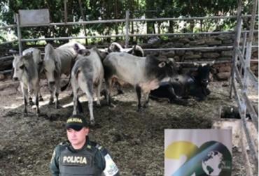 Colombia, Fedegán, Fiebre aftosa, contrabando, 4 millones de bovinos entraron de contrabando durante 2016 y parte de 2018, Lafaurie, Iván Duque Márquez, ICA, Ministerio de Agricultura, circulación viral, CONtexto ganadero, noticias ganaderas de Colombia, fiebre aftosa, bovinos