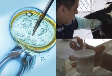 Embrión in vivo, embrión in vitro, Protocolos transferencia de embriones, métodos transferencia de embriones, transferencia de embriones en bovinos, procesos de biotecnología reproductiva, costo transferencia embriones Colombia, transferencia embriones Colombia, técnica de transferencia de embriones, transferencia embriones in vitro, transferencia embriones in vivo, CONtexto ganadero, ganaderos Colombia, noticias ganaderas Colombia