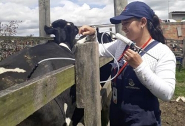 vacunación contra la aftosa, tips para la vacunación, vacunador del FNG, RUV, Registro Único de Vacunación, ganaderos en Colombia, aftosa, lucha contra la aftosa, Ciclos de Vacunación