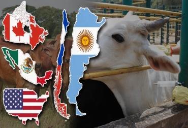 sanidad animal, sanidad animal América, argentina, Chile, méxico, estados unidos, Canadá, sanidad bovina, salud bovina, Salud Animal, manejo sanitario de bovinos, Enfermedades reproductivas, enfermedades bovinas, vacas, bovinos, patologías, Brucelosis, Fiebre aftosa, CONtexto ganadero, ganaderos colombia, noticias ganaderas colombia