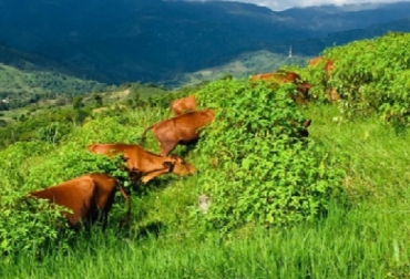 Colombia, Fedegán, Proyecto Ganadería Colombiana Sostenible, logros de GCS,, entrega de resultados, Barranquilla 2019, CONtexto ganadero, ganadería colombiana sostenible