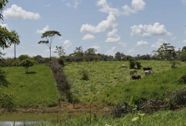 regeneración natural en la finca, regeneración natural, dispersión natural,  dispersión natural de semillas, ganaderos, ganadería sostenible