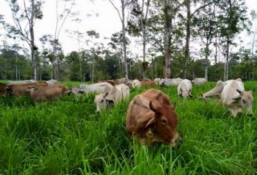 Ganadería, ganadería colombia, noticias ganaderas, noticias ganaderas colombia, CONtexto ganadero, felipe aristizábal, felipe aristizabal consulta pecuaria, FAO, vacas pueden salvar al mundo, Ganadería Sostenible, Expo Agrofuturo