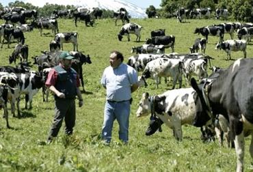 Ganadería, ganadería colombia, Ganadería colombiana, CONtexto ganadero, noticias ganaderas, noticias ganaderas colombia, empresa ganadera, explotaciones ganaderas, ganadería como empresa, MSD, objetivos ganaderos, ganaderos, ganaderos colombia