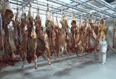 sangre producto del beneficio, sangre de los bovinos, ubproductos bovinos, subproductos de la ganadería, subproductos en el sacrificio bovinos, materiales secundarios obtenidos del proceso de sacrificio, sacrificio animal