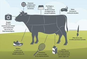 subproductos de la ganadería, subproductos bovinos, subproductos en el sacrificio bovinos, materiales secundarios obtenidos del proceso de sacrificio, sacrificio animal
