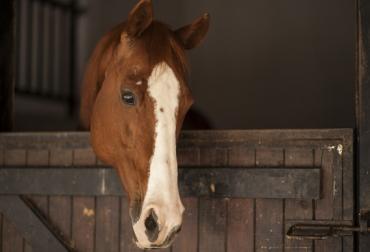 ganadería, ganadería colombia, noticias ganaderas, noticias ganaderas colombia, contexto ganadero, caballo, estado de ánimo de un caballo, Katrina Merkies, profesora en el Ontario Agricultural College de la Universidad de Guelph, revistaAnimals, tasas de parpadeo de los caballos, estrés, estrés caballos, caballo estresado,