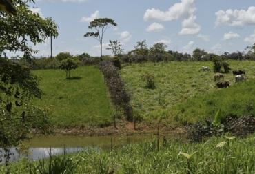 Ganadería, ganadería colombia, Ganadería colombiana, CONtexto ganadero, noticias ganaderas, noticas ganaderas Colombia, aislamiento de fuentes hidricas, aislamiento agua, ganado, ganaderos colombia, ganaderos