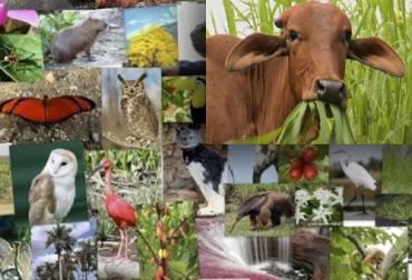 biodiversidad y ganadería, Sistemas silvopastoriles, biodiversidad, la ganadería contribuye a la biodiversidad, ganadería amigable con el medio ambiente
