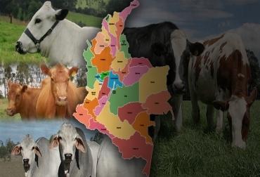 diferentes las razas de ganado, diferencias entre razas, características de las razas, clasificación de las razas