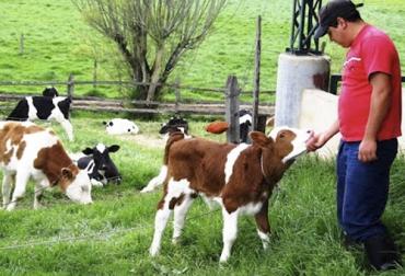 Buenas Prácticas Ganaderas, costos, productividad, negocios, exportaciones, Ganadería, ganadería colombia, noticias ganaderas colombia y contexto ganadero