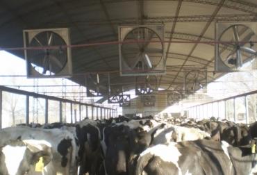 ganadería, ganadería colombia, noticias ganaderas, noticias ganaderas colombia, contexto ganadero, estrés, estrés calórico, estrés en bovinos, medir estrés en bovinos, inia, inia uruguay, verano, verano colombia,