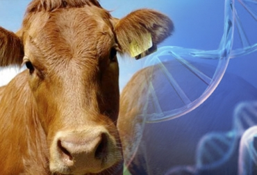 Genómica ganadería, genoma del ganado, identificación genoma, genes de los bovinos, genes vacas, genómica vacas, genómica ganadería Colombia, Genética Cebú, mejoramiento genético en bovinos, potencial genético de bovinos, plataforma de Asocebú, plan de apareamiento bovino, progreso genético bovino, CONtexto ganadero, ganaderos Colombia, noticias ganaderas Colombia, ganadería, ganadería Colombia