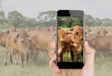 ganadería, ganadería colombia, ganadería colombiana, contexto ganadero, noticias ganaderas, noticias ganaderas colombia, subastar, comercialización de ganado, vena de ganado, negocio subastas, subastas, venta bovinas, decreto 457, ganaderos, ganaderos colombia