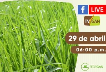 facebook live, Bracharia Híbrido Sabia AIG 330J, bracharia AIG 330J, semilla incrustada, capacitación, capacitación en línea, capacitación online, fedegan, TVGAN, Colombia, Fedegán capacitación, capacitación Facebook Live, Sáenz Fety, pastos para clima cálido, nuevo pasto, coronavirus, COVID-19, cuarentena, Ganadería, ganadería colombia, noticias ganaderas, noticias ganaderas colombia, CONtexto ganadero