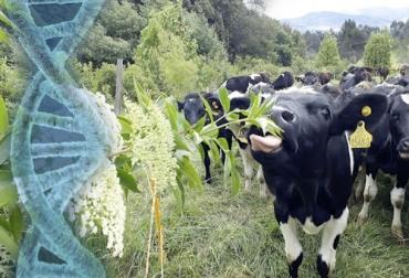 Ganadería, ganadería colombia, noticias ganaderas, noticias ganaderas colombia, CONtexto ganadero, Genética, carne de res, carne sostenible, sostenibilidad, mejoramiento genético, razas bovinas, ganaderos, negocio ganadero, rentabilidad ganadería, ganaderos colombia, Medio Ambiente