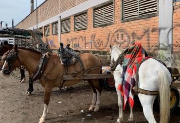 Ganadería, ganadería colombia, noticias ganaderas, noticias ganaderas colombia, CONtexto ganadero, adopta un caballo, adopta un caballo antioquia, erradicar vehículos de tracción animal, vehículos tracción animal, zorreros, Gobernación de Antioquia, Adopta un caballo transforma una vida