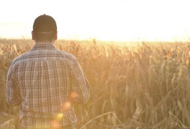 Ganadería, ganadería colombia, noticias ganaderas, noticias ganaderas colombia, CONtexto ganadero, vitala, vitala míaz híbrido, maíz híbrido, producción de maíz, Seguridad Alimentaria, Bayer, investigación maíz, investigación mexicana de maíz